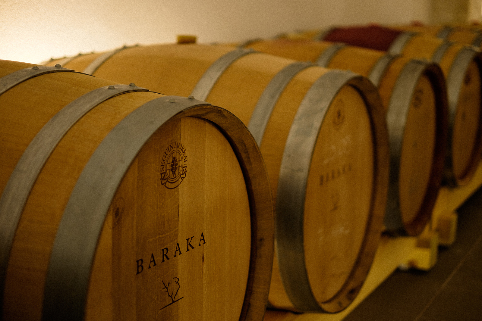 Winemaking in Dalmatia Croatia