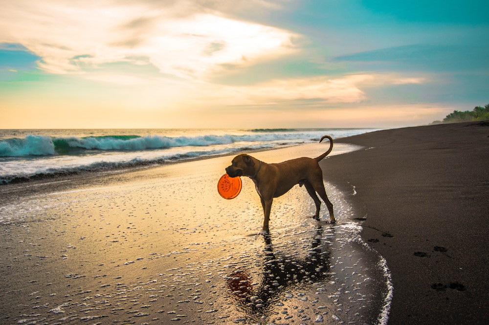 Plaža za pse u Dalmaciji