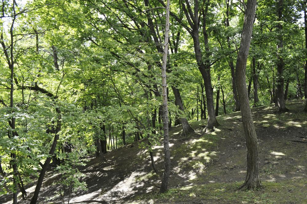 marijan forest park