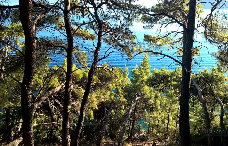 Marjan Park Forest