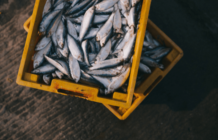 types of fish in croatia