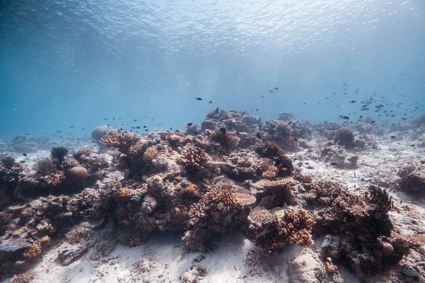 Island of corals or island of sponges